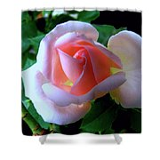 Virgin Pink Rose With Thorns Shower Curtain