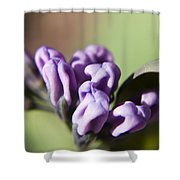 Virginia Bluebell Buds Shower Curtain