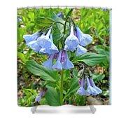 Virginia Bluebells - Mertensia Virginica Shower Curtain