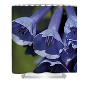 Virginia Bluebells Shower Curtain