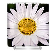Virginia Daisy Shower Curtain