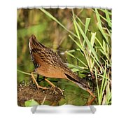 Virginia Rail Shower Curtain