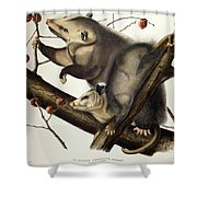 Virginian Opossum Shower Curtain