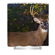 Virginian White Tail Buck Shower Curtain