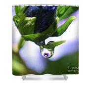 Vision In A Raindrop Shower Curtain