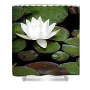Vision Of Paradise Shower Curtain
