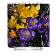 Visions Of Spring Shower Curtain
