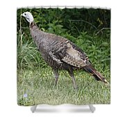 Visions Of Turkey  Shower Curtain