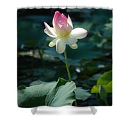 Visit To Lilly Pond 2 Shower Curtain