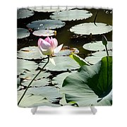 Visit To Lilly Pond Shower Curtain