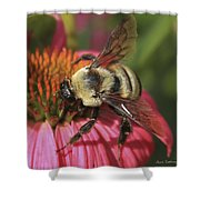 Visitor Up Close Coneflower  Shower Curtain