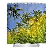 Viti Levu, Coral Coast Shower Curtain