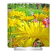 Vivid Colorful Yellow Daisy Flowers Daisies Baslee Troutman Shower Curtain
