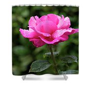 Vivid Pink Rose  Shower Curtain