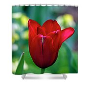Vivid Red Tulip Shower Curtain