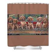 Vizsla Pups Shower Curtain