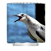 Vocal Sea Gull Shower Curtain