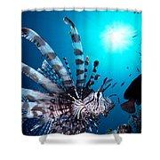 Volitan Lionfish Shower Curtain by Steve Rosenberg - Printscapes