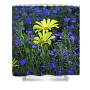 Voltage Yellow And Electric Blue 06 Shower Curtain