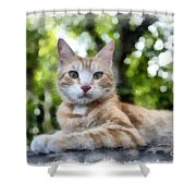 Volterra Italy Cat Watercolor Shower Curtain