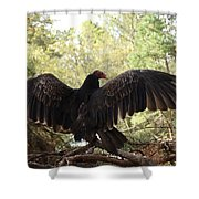 Vulture 429 Shower Curtain