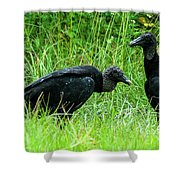 Vulture Pair Shower Curtain