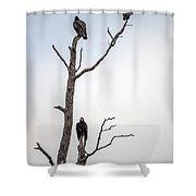 Vultures Perched In A Dead Tree Shower Curtain