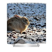 Wabbit Shower Curtain