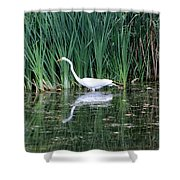 Wading And Waiting Shower Curtain