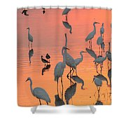 Wading Birds Forage In Colorful Sunset Shower Curtain