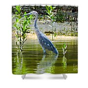 Wading Blue Heron Shower Curtain