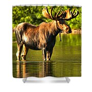 Wading For Breakfast Closeup Shower Curtain