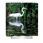 Wading For Food Shower Curtain