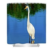 Wading Great White Egret Shower Curtain
