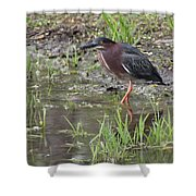 Wading Green Heron Shower Curtain
