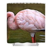 Wading In Water Shower Curtain