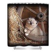 Wagon Wheel Kitty. Shower Curtain