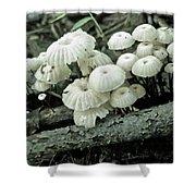 Wagon Wheel Mushroom Colony Shower Curtain
