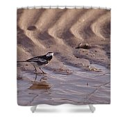 Wagtail On West Sands Shower Curtain