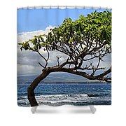 Waiehu Panarama Shower Curtain