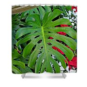 Waikiki Split Leaf Shower Curtain
