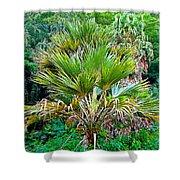 Waimea Palm Study 2 Shower Curtain