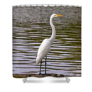 Wait And Rest Shower Curtain
