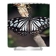 Waiting --- Rice Paper Butterfly Shower Curtain