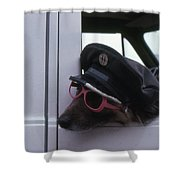 Waiting Dog  Shower Curtain