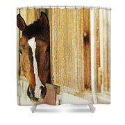 Waiting For A Ride Shower Curtain