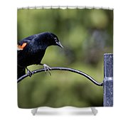 Waiting For Suet Shower Curtain