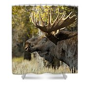Waiting For The Challengers Shower Curtain by Sandra Bronstein