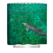 Waiting Porpoise  Shower Curtain