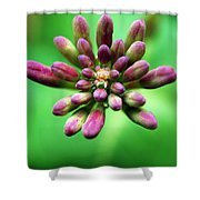 Waiting To Blossom Shower Curtain